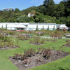 One segment of Wellington's Botanic Garden