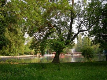 The idyllic lake inmidst of the park
