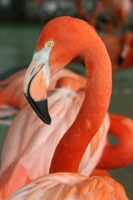 Flamingos are only one of many bird species to discover