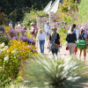 People enjoying the variety of flowers at Denver Botanic Gardens.