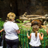 Family fun guaranteed: Watching bear, monkeys, giraffes, and numerous other animals at Denver Zoo.