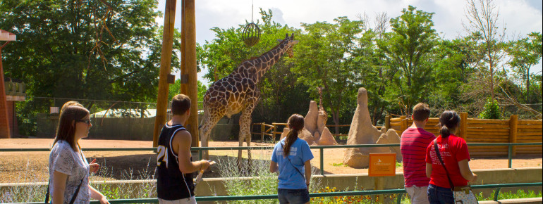 A group passes by the stunning giraffes at Denver Zoo.