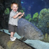 Family fun at its best: Here is a child viewing fish at the Downtown Aquarium.
