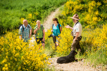 Learn about the region on a guided tour with a ranger.