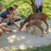 Vistors can feed the animals at the petting zoo.
