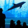 The aquarium in Genova is one of the biggest in Europe.