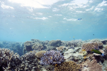 Great Barrier Reef, QLD 2014