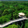 View over the canopy walkway at Hainich National Park.