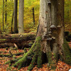 Hainich beech forest