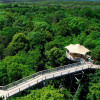 Aerial view of the canopy walkway