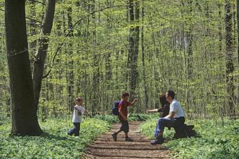 Numerous paths lead through the park.