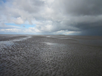 Experience the seemingly endless mudflats at the Lower Saxon Wadden Sea National Park.
