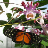 Butterfly house.