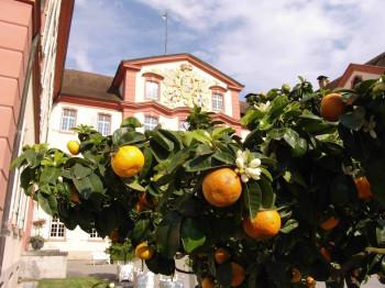 Explore more than 50 citrus fruit types.