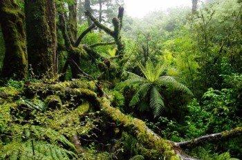 Rainforest at Milford Sound