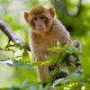 The primates originally come from Morocco and Algeria.