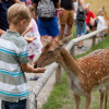 There are also fallow deer at Salem Zoo.