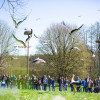 A free-flying breeding colony of white storks also lives at Affenberg.