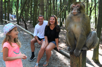 At the Salem Monkey Mountain you can experience the animals up close.