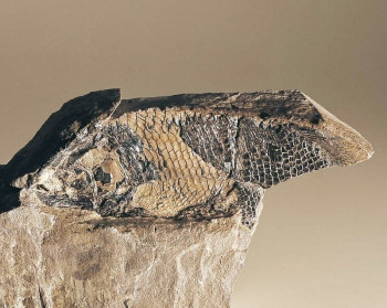 Million year old fossil