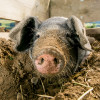 Meet the animals that typically live on a farm.