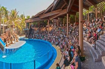 Sea Lion show at Oasis Park