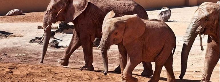 Elefants at Oasis Park