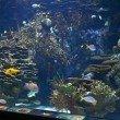 Aquarium in the Oceanogràfic