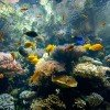Fascinationg world of corals