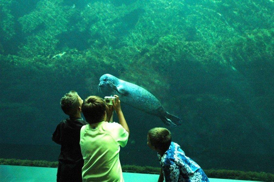 Oceanopolis Brest ? Tourist Attraction Brest