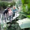 Observe the tropical forest section standing on a transparent chain bridge