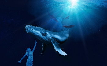 Modern video installations bring even the biggest ocean dwellers almost close enough to touch.