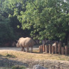 Parco Natura Viva is the only zoo in Europe where rhinos and hippos live together.