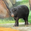 At the pigmy hippo house, you can visit pigmy hippos, elephant shrews, and turtles.