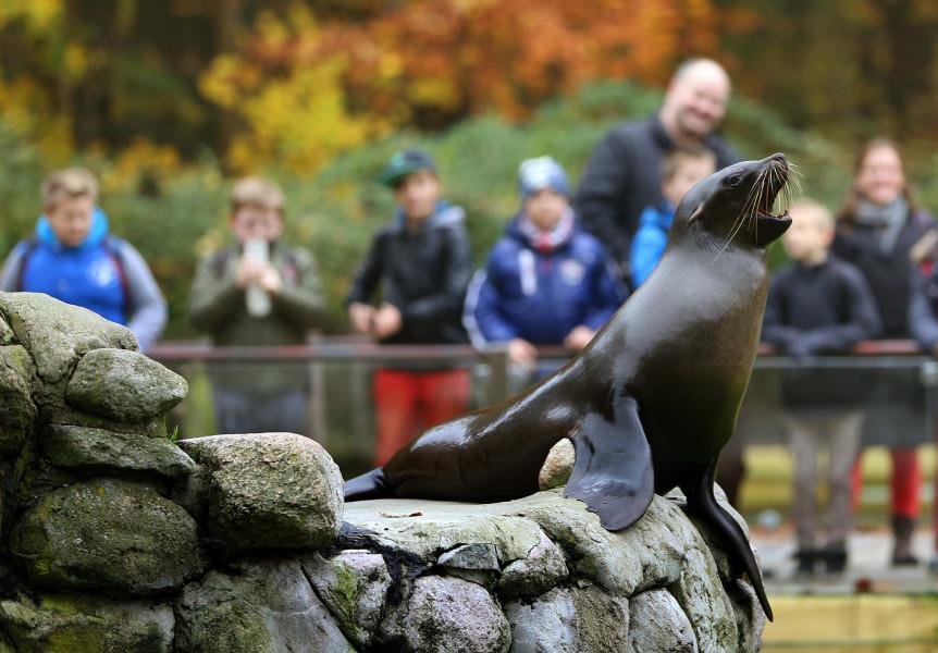 Garten Rostock rostock zoo tourist attraction rostock