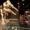 More than 40 dinosaur skeletons are shown at the Royal Tyrrell Museum