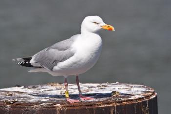 Around 10,000 different species live at the Schleswig-Holstein Wadden Sea National Park.