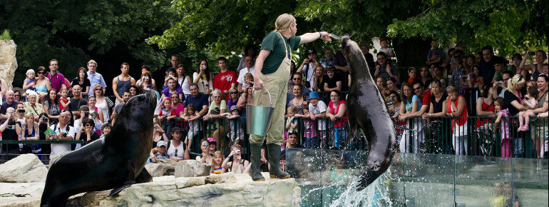 Have you ever seen how South American sea lions are being fed? Schönbrunn Zoo provides its visitors the opportunity to experience feeding sessions.