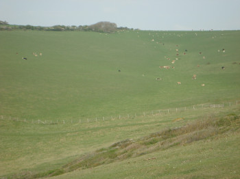 Seemingly endless meadows on the Seven Sisters.