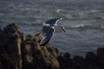 Discover many sea birds living at the cape