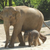 Up to 200 youngs are born at Tierpark Hagenbeck every year.