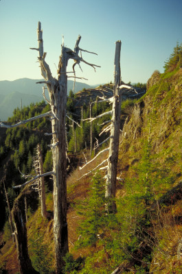 Free view on Tillamook Forest