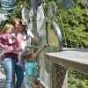 The tree top walk is a great destination for families.