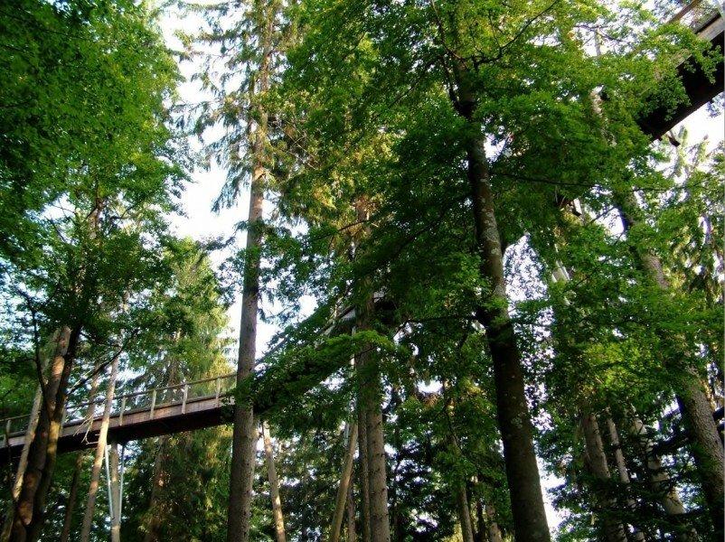 Tree Top Walk In The Bavarian Forest National Park Tourist Attraction Neusch 246 Nau Im