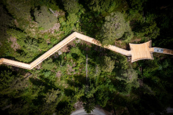 On the tree top walk you will experience nature from a new perspective.