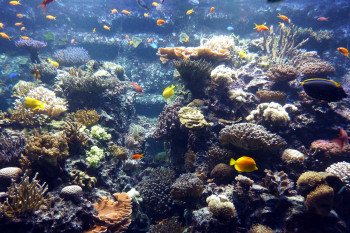 More than 60 species of corals and fish can be spotted at the coral reef.