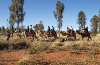 Uluru Camel Tours, Red Centre