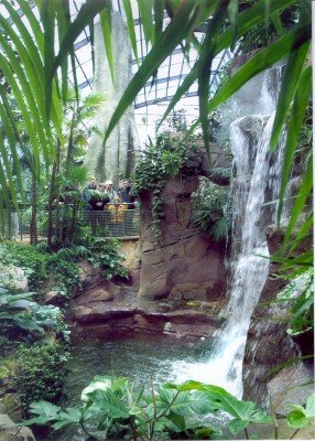 The mountian rain forest at the amazon house.