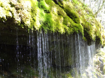 Wutach Canyon is home to thousands of types of plants and animals.