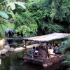 At Gondwanaland, visitors pass tapirs on their boat trip.